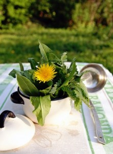 Edible dandelion and other weed plants in a small pot