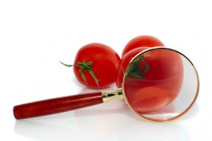 Tomato under the magnifying glass